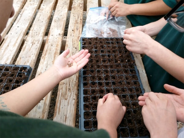 Milkweed and Monarchs – Planting